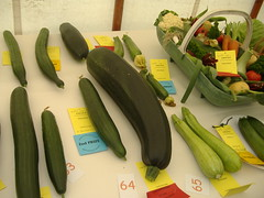 banana(0.0), plant(0.0), vegetable(1.0), summer squash(1.0), produce(1.0), fruit(1.0), food(1.0), cucumber(1.0), cucurbita(1.0),