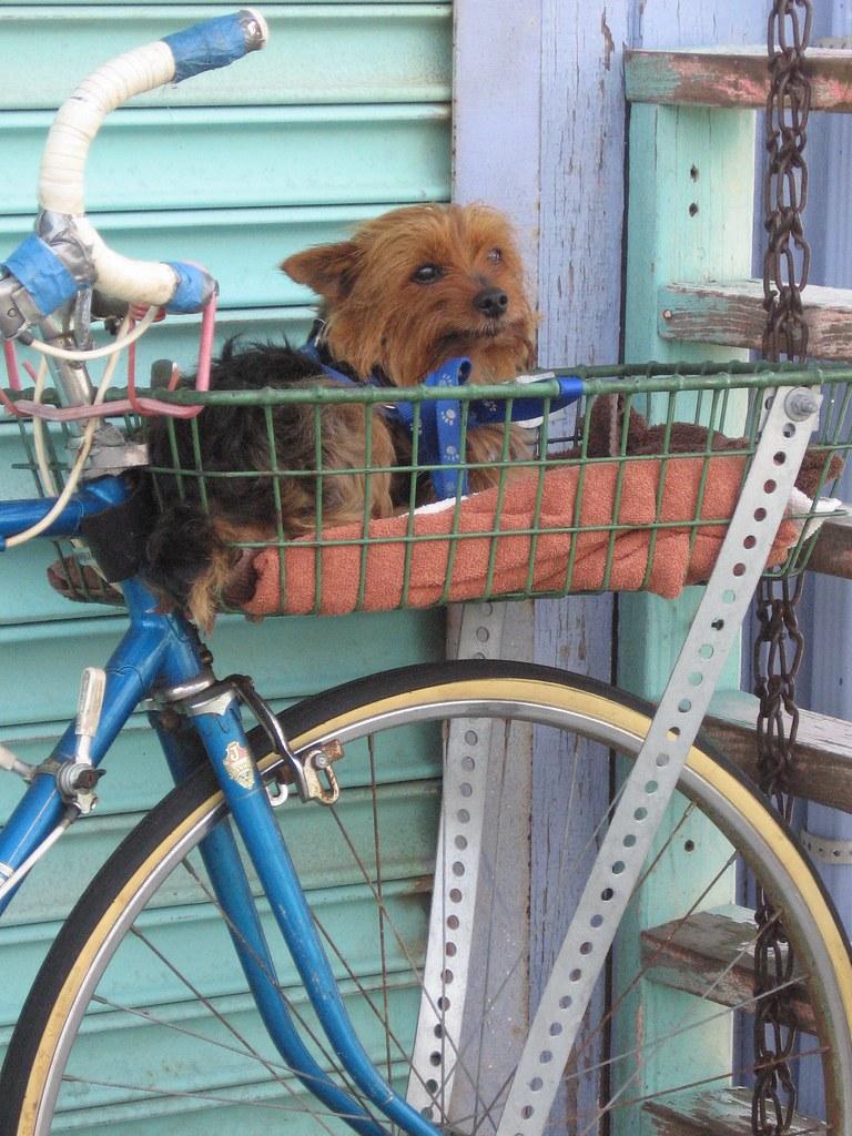 Bicycle Basket Dog