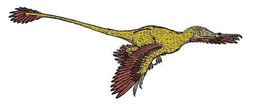Microraptor_575_AL