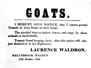 Oi tink he had a ting about goats!