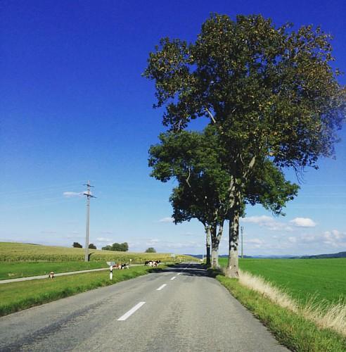 In giro per la campagna svizzera
