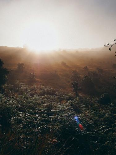 sunrise asia olympus horton srilanka ceylon lk worldsend southasia nuwaraeliya hortonplains bakersfalls centralprovince em5 ohiya 斯里蘭卡 hortonplainsnationalpark olympusmzuikodigitaled1240mmf28pro olympusm1240mmf28