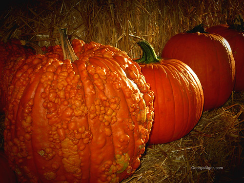 Morning Pumpkins, by George Alger