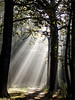 Rays of light by Wouter de Bruijn