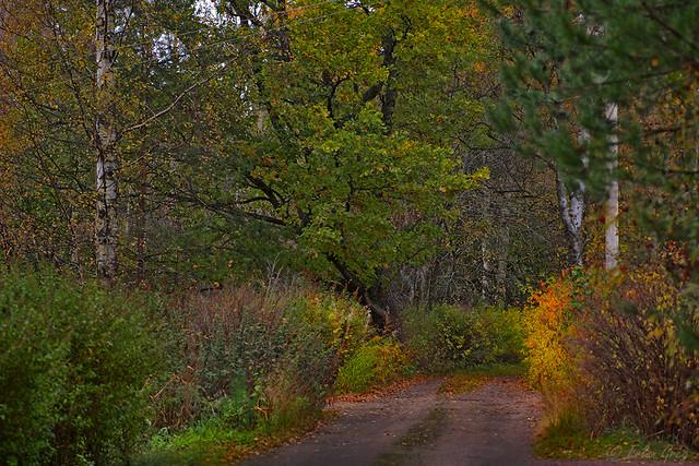 autumn_roads_20
