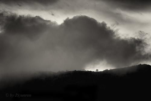 L'albero e la nuvola