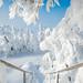 Wonderful winter by Olga Gavrilova