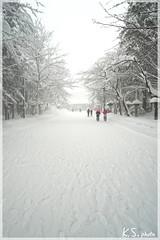 日本北海道.札幌_北海道神宮.11