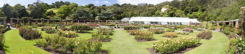 rose garden @ Wellington Botanic Gardens