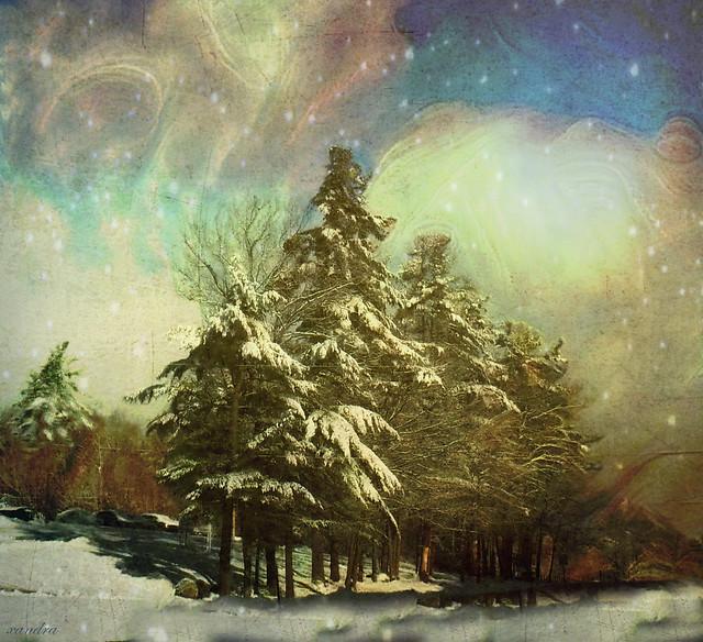 ...snowy pines...