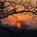 Framed Sunrise