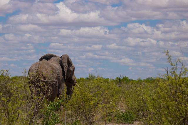 Elephants at the airstrip