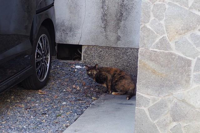 Today's Cat@2017-04-02