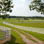 th_KY Horse Park 09