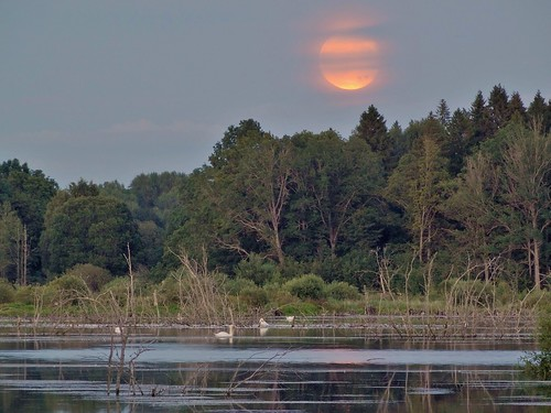 Moonrise, Rosenkällasjön Tinnerö Linköping Sweden 1 Aug 2015 (DSC10297Abr3)