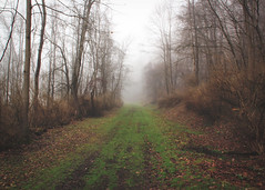 Tidioute Bird Trail- Foggy Morning