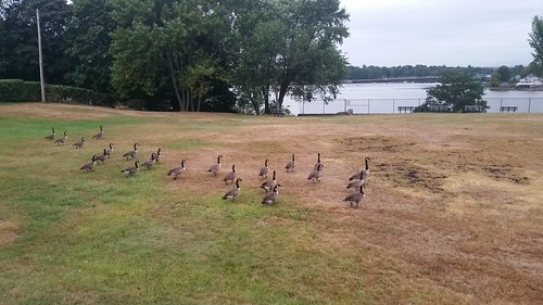 Try Getting These Geese In a Row - 20150910_182001