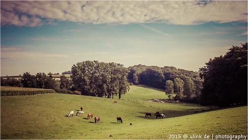 _münster(pferde)land