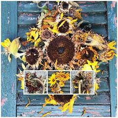 Virginia Sunflowers