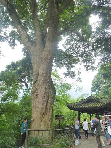 CH-Emeishan-Wannian-Qingyin-sentier (8)