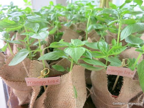 basil-plant.jpg