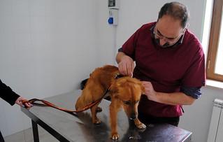 Casamassima-Scandalo microchippatura dei cani
