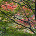 Colors of Autumn Trees by AykutPamuk