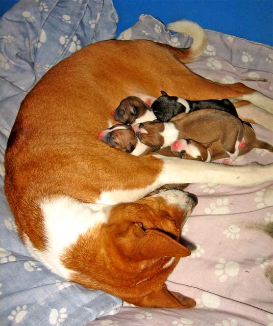 Nirvana & i 5 appena nati