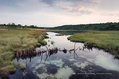 As águas cristalinas e potáveis do rio Cuanavale no Sudeste de Angola (Moxico) - a verdadeira riqueza do nosso Planeta no geral e de Angola em particular. Água potável sem tratamento algum - bebi água directamente destes rios durante 35 dias, todos os dia