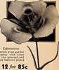"""Image from page 15 of """"Dreer's autumn planting guide for 1940"""" (1940)"""