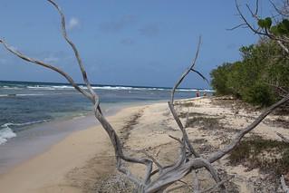 Изображение на Cocoloba Beach. ocean beach sand nps marlena usvi deaftalent deafoutsidetalent deafoutdoortalent