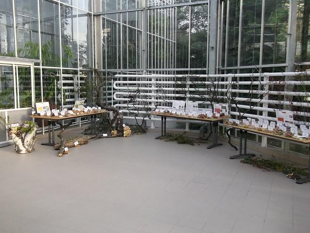 Expozitie ciuperci 2014
