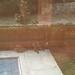 Raccoons in the garden