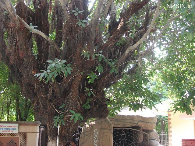 Beautiful Green Area in Teerthdham Mangalayatan