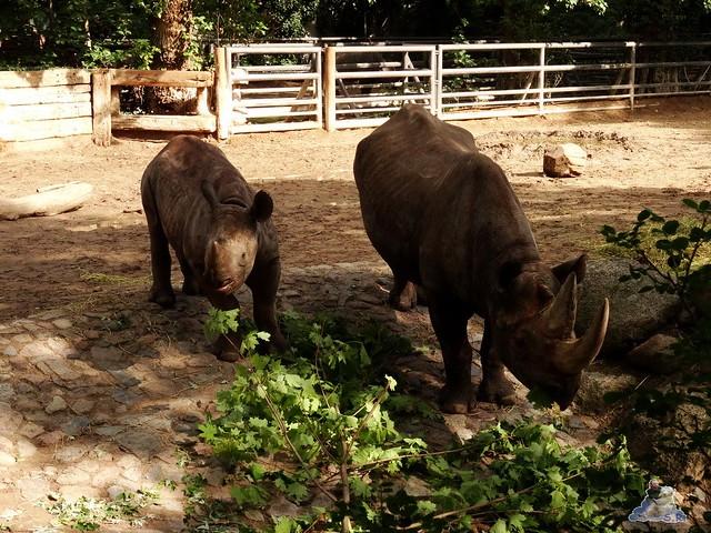 Zoo Berlin 28.08.2015  057