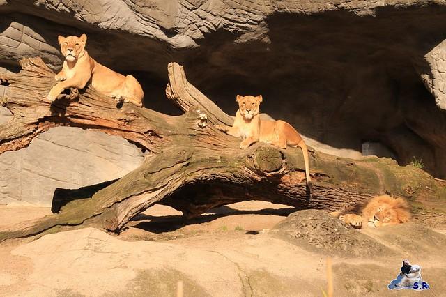 Tierpark Hagenbeck 27.09.2015 099