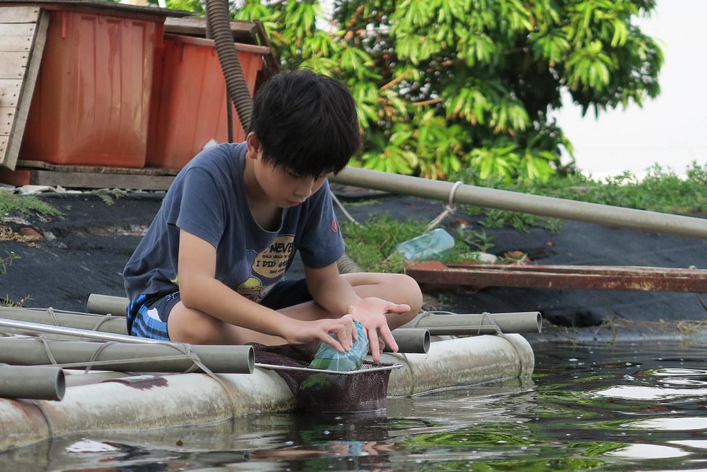 高雄市湖內區綠水塘無毒蝦 (29)