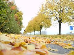 It's Autumn somewhere in Kävlinge