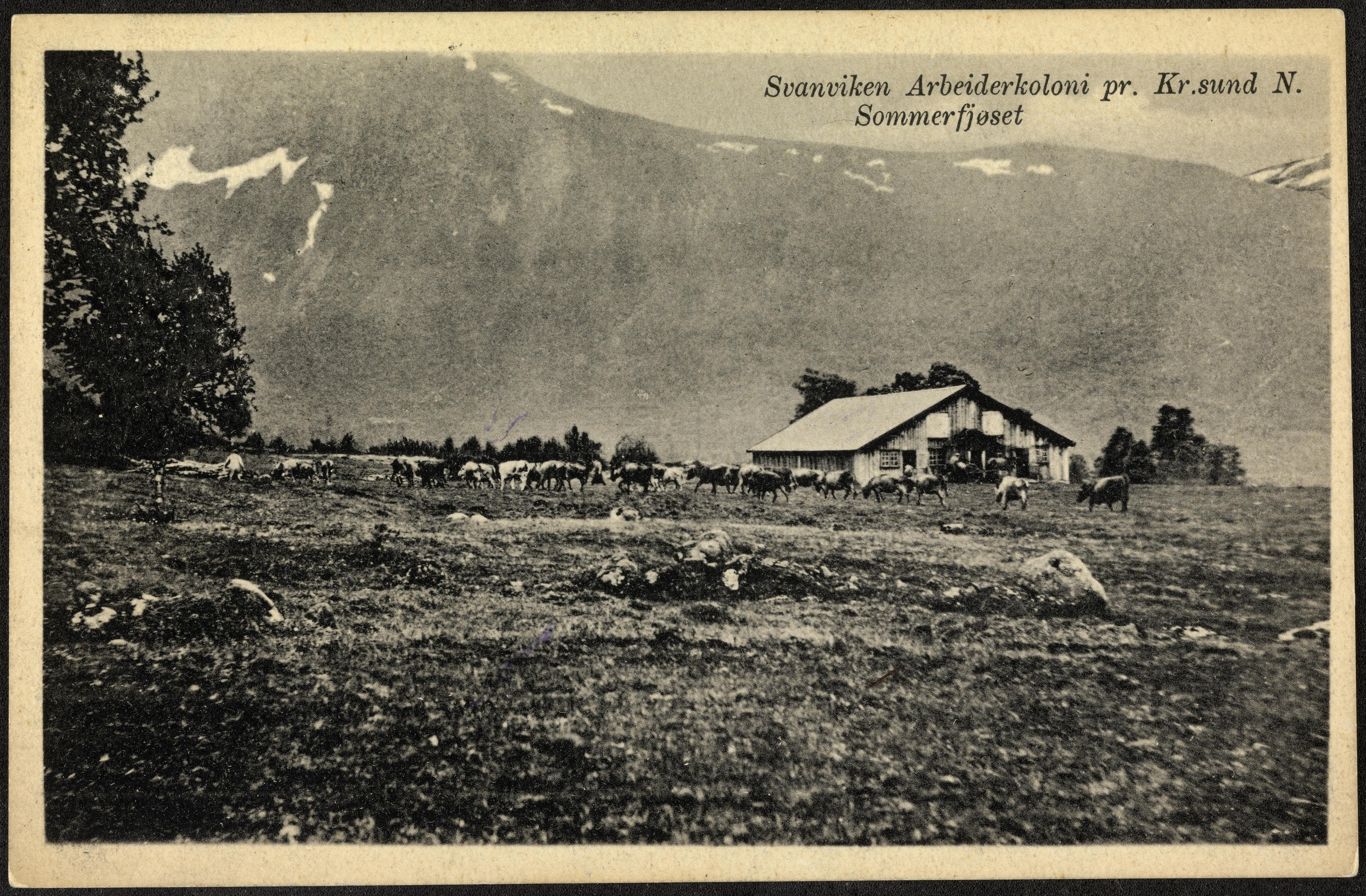Svanviken Arbeiderkoloni pr. Kr. sund N. Sommerfjøset