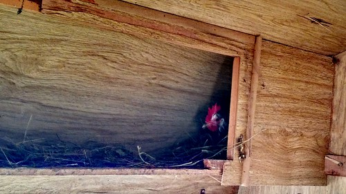 Nesting place in the camper coop