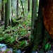 Small photo of Creek amid ferns