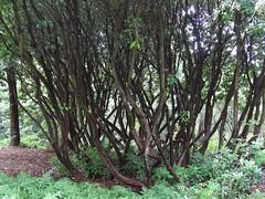 Jardin du Vasterival - Sainte-Marguerite-sur-Mer