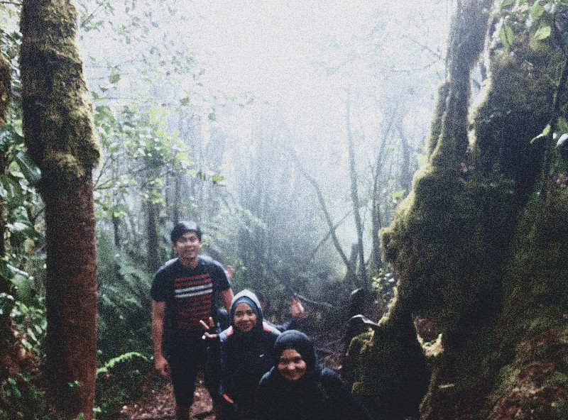 mount irau mossy forest (4)