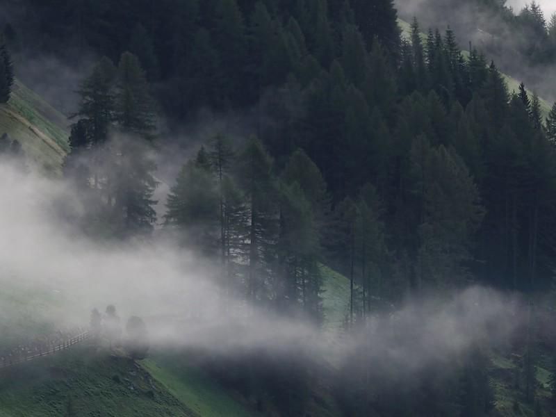 Polany i mgły