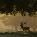 Red Deer Sunrise by Rob'81