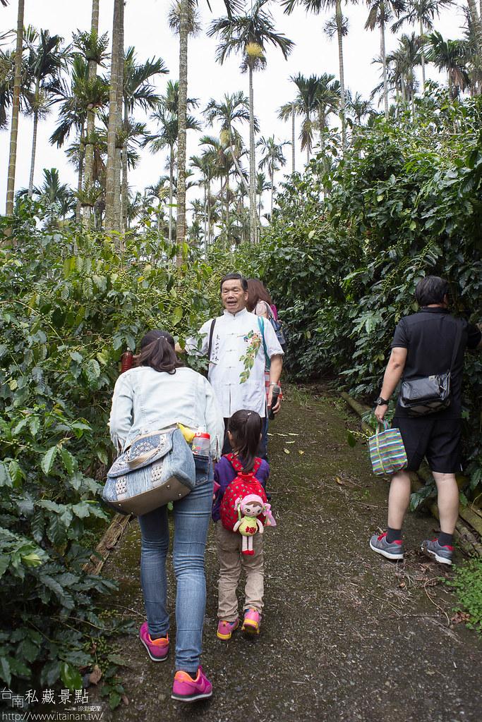 村長咖啡-天池咖啡步道 (9)