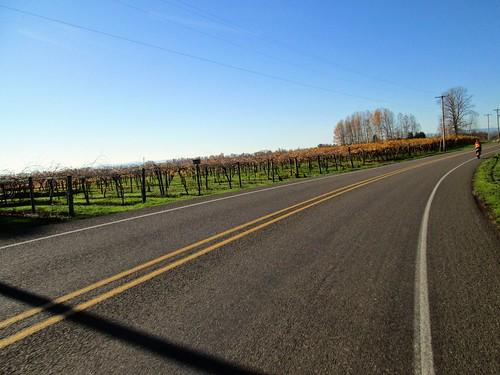 Vineyard on River Rd, not far from the Willamette River bridge