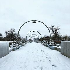 Winter #606