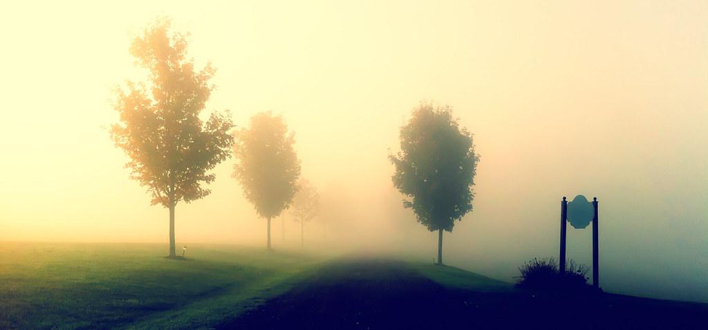 Foggy Lane