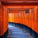 Torii Path 千本鳥居 by Chen Yiming